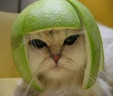 Gratuitous Cat Photo