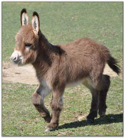 Who plays the donkey?